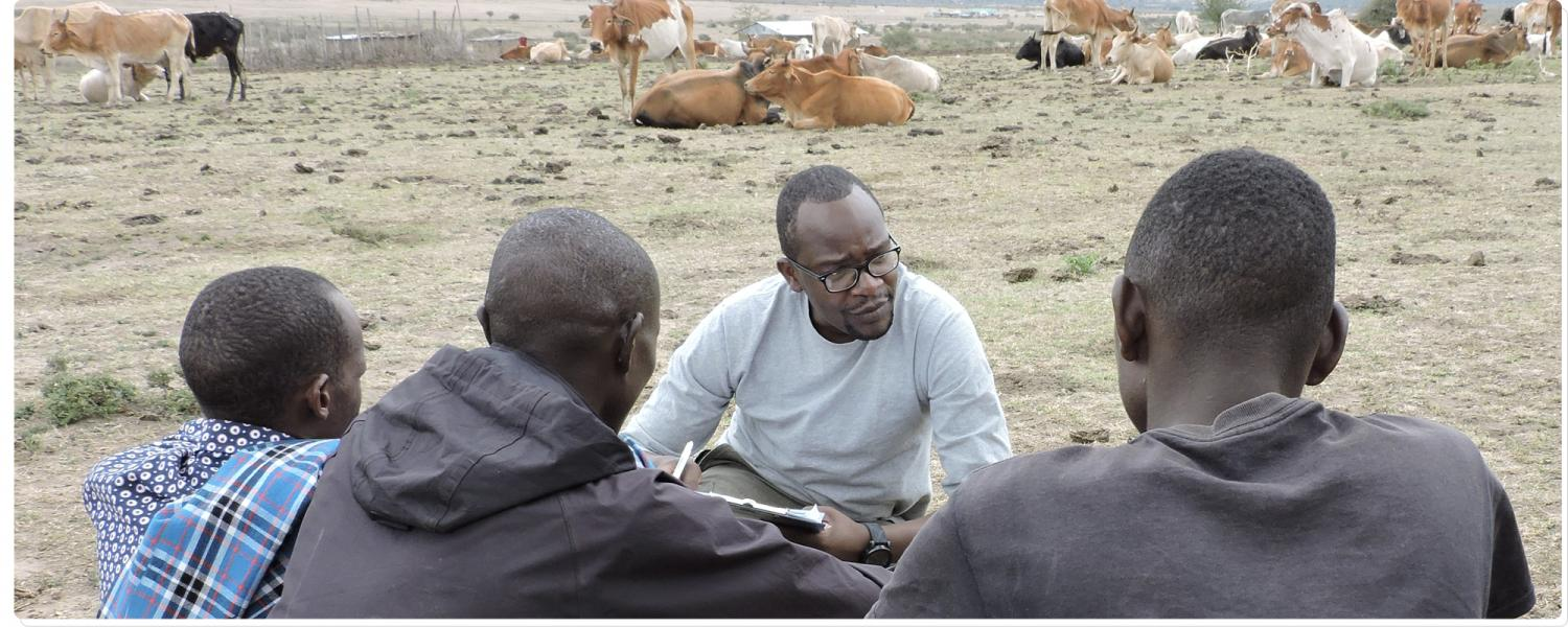 A man talks to three men; cows line the background